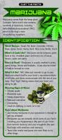 Marijuana Rack Cd Front