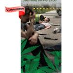 PAM-SSDA-49V-Marijuana & Driving-VIET-LO RES