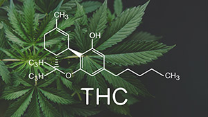 Marijuana and THC composition